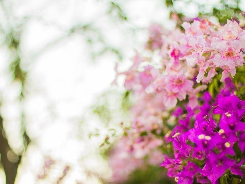 Como montar um belo jardim em casa: confira 5 dicas
