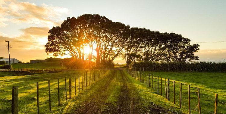 Vale a pena investir na compra de imóveis rurais?