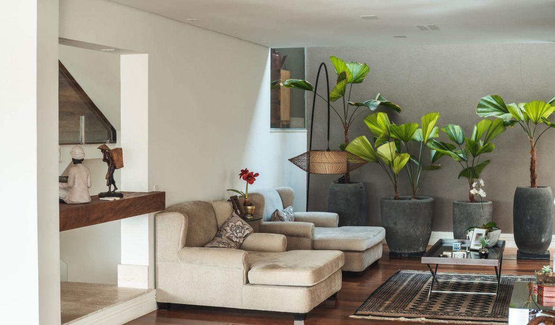 Dicas para cuidar de plantas em apartamentos