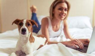 6 tipos de pets indicados para quem mora em apartamento