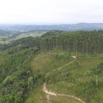 Terreno Rural - Fazenda - Venda - Reflorestamento - Pouso Redondo