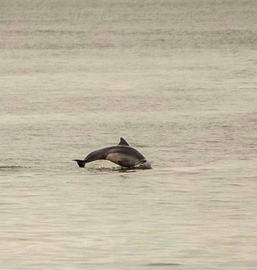 Grupo de Golfinhos em Balneário Camboriú