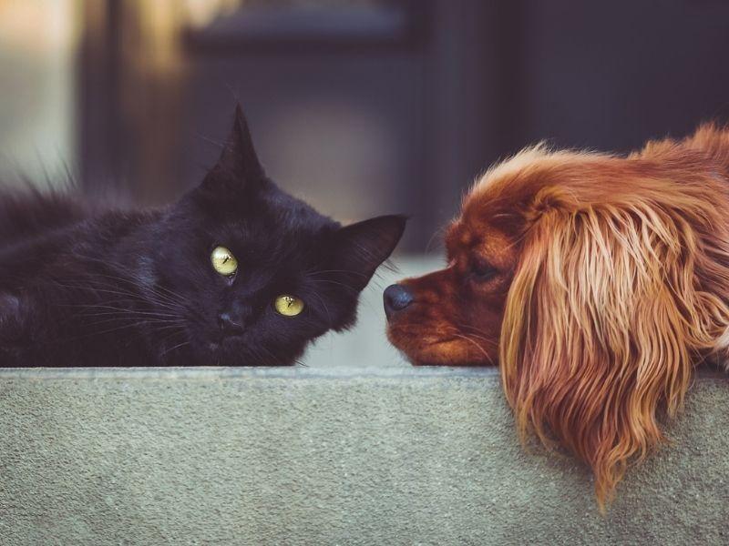 Quais os cuidados com pets em apartamentos?