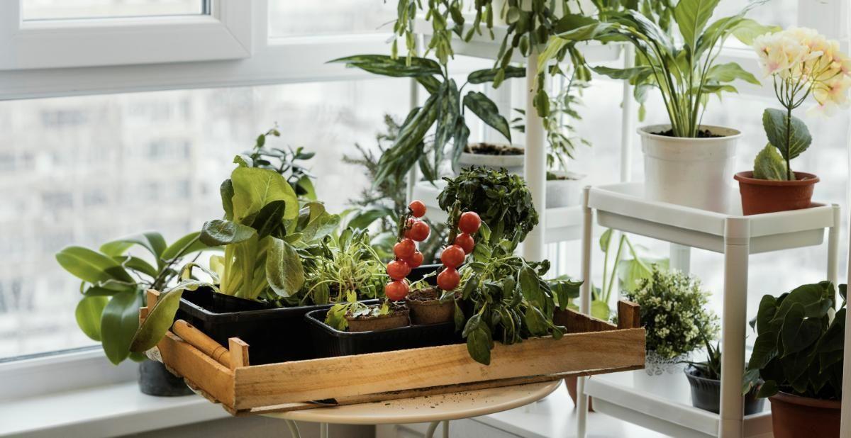 Como montar uma horta dentro de um apartamento?