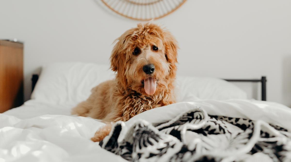 Pet em apartamento pequeno: confira algumas dicas