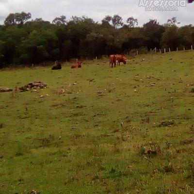 Sítio para Venda em Caxias do Sul, Criúva