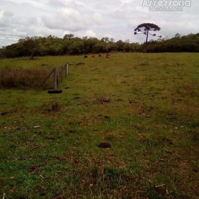 Chácara para Venda em Caxias do Sul, Criúva