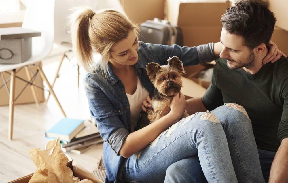 VISITE NOSSO BLOG: O que diz a lei e quais cuidados para manter seu pet saudável morando em apartamento