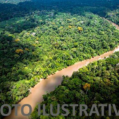 Área Rural para Venda - Gleba de mata primária com  para Compensação Ambiental - Angra dos Reis, RJ