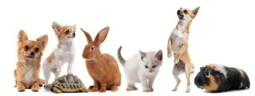 Pet lovers? Conheça alguns animais indicados para morar em apartamento