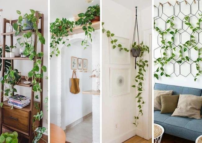 Natureza dentro do apartamento: tendência, saiba como aderir